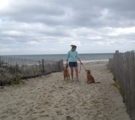 dog training in the south shore of MA